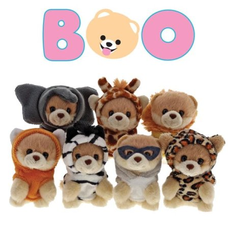 Get your paws on Boo as you've never seen him before!