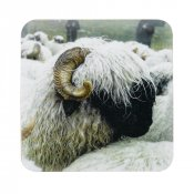 Valais Blacknose Sheep Coasters (Set 4)