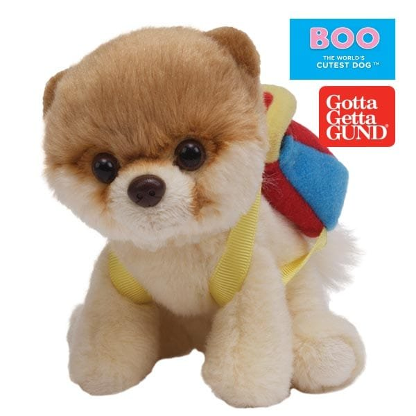 Introducing Boo, The World's Cutest Dog